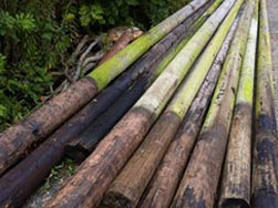 SECOND HAND TELEGRAPH POLES